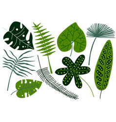 collection tropical leaves exotic jungle palm vector image