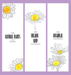 design template with flowers daisy vector image