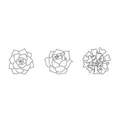 Succulent echeveria set - lovely rose lilacina vector