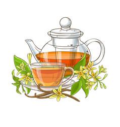 Vanilla tea on white background vector
