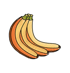delicious and sweets bananas vector image vector image