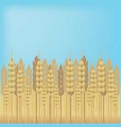 yellow wheat over blue sky background vector image