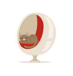 lovely grey cat sleeping on a modern ball chair vector image