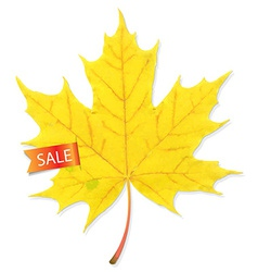 Autumn Sale Leaf vector