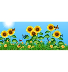 Butterflies flying in the sunflower field vector image
