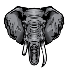 head elephant drawing vector image