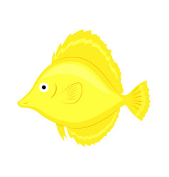 yellow coral fish isolated on vector image