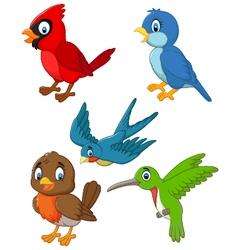 Cartoon birds collection set vector image vector image
