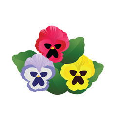 blue pink and yellow pansy flowers with green vector image