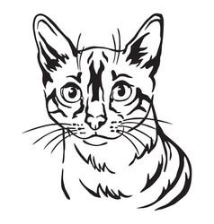 Decorative portrait cat 8 vector