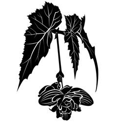 begonia vector image vector image