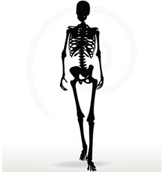 skeleton silhouette in walk vector image