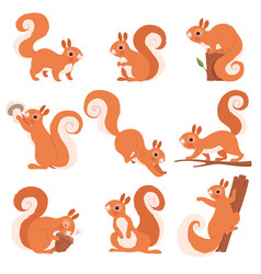 cartoon squirrel funny forest wild animals vector image