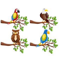 Different kinds of birds on the branch vector