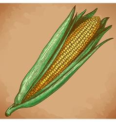 Engraving corn retro vector