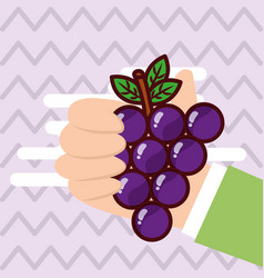 hand holding grapes fresh colored background vector image