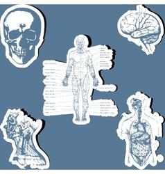 Human anatomy vector