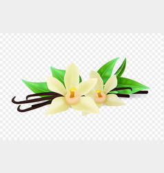 realistic vanilla flowers and sticks vector image