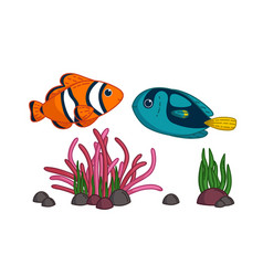Tropical fishes with anemone blue surgeonfish and vector