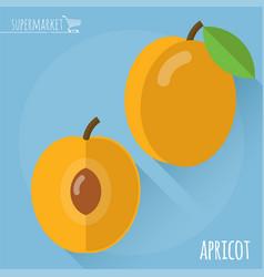 Apricot icon vector