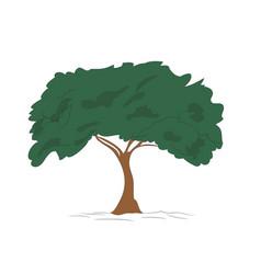 big tree drawing color vector image
