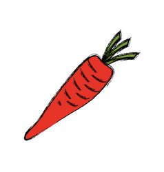 Carrot vegetable natural vector