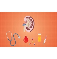 kidney health with medicine tools like pills vector image