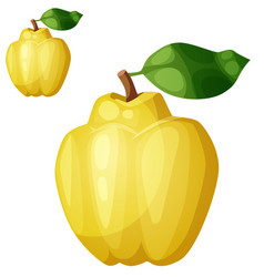 quince fruit cartoon icon isolated on vector image