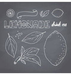 Set of hand drawn lemonade ingredients vector