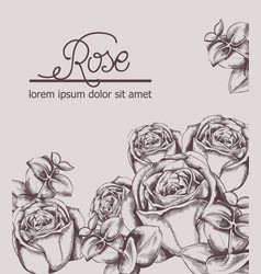 vintage roses card line art boho style posters vector image