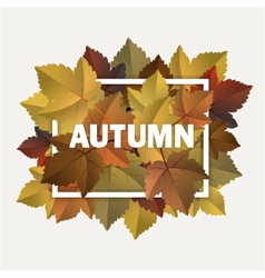 Autumn decoration vector
