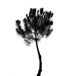 drawing of the tree on white background vector image