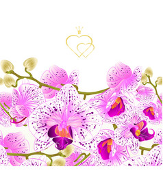 Floral border seamless background branch orchids vector