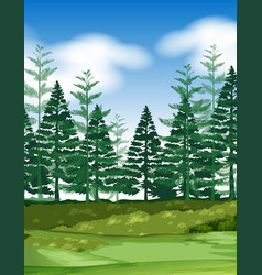 Forest scene with pine trees vector