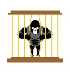Gorilla in cage in Zoo Strong Scary wild animal in vector image