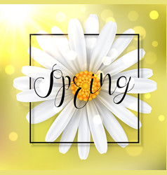 spring background with chamomile flower vector image