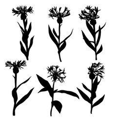 Silhouettes of drawing cornflowers vector