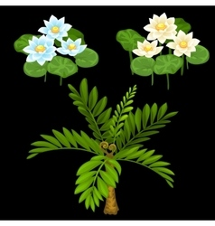 Three water lilies and small palm tree vector image