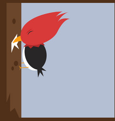 Woodpecker on white background vector