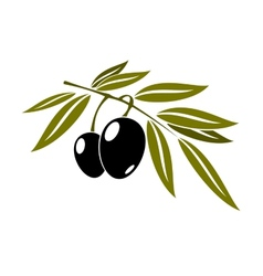 Black olives branch with leaf vector image vector image