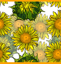 Blooming yellow sunflowers and unblown green vector