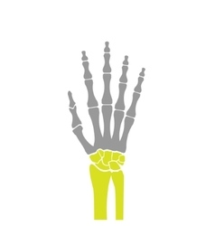 Flat Icon of Hand Bones on White Background vector image