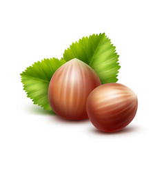 full unpeeled hazelnuts with leaves on background vector image