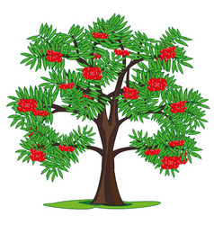 Tree rowanberry and ripe berries on branch vector