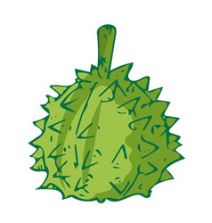 durian the tropical fruit isolated vector image