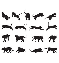 black tiger silhouettes vector image