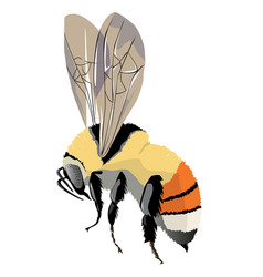 Bumble-bee on wing vector