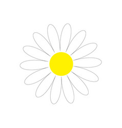 Daisy chamomile cute flower plant collection love vector