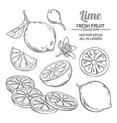 lime fruits set vector image