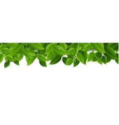 tree branches isolated transparent background vector image